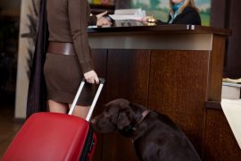21219274 - female guest with dog and baggage at hotel reception